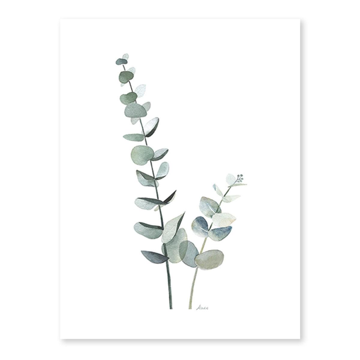 Affiche & poster Affiche Eucalyptus