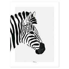 Achat Affiche & poster Serengeti - Affiche Le Zèbre