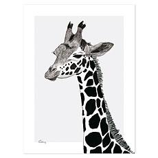 Achat Affiche & poster Serengeti - Affiche La Girafe