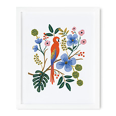 "Achat Affiche & poster Affiches ""Perroquet"" - 40.6 x 50.8 cm"
